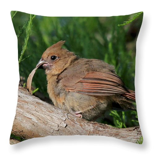 Northern Cardinal Throw Pillow featuring the photograph What The Bark Is This by Meg Rousher