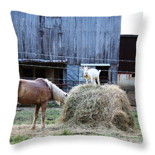 Goat Throw Pillow featuring the photograph What You Looking At by La Dolce Vita