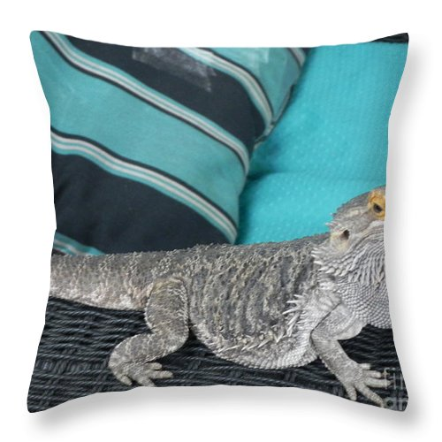 Photography Throw Pillow featuring the photograph Whatcha Lookin At by Chrisann Ellis