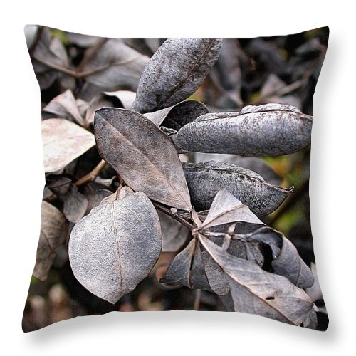 False Blue Indigo Throw Pillow featuring the photograph Still Life Within by Cynthia Wallentine