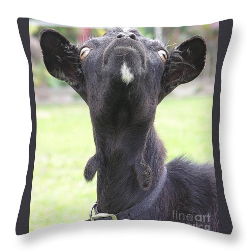 Goat Throw Pillow featuring the photograph Whats Up by Mary Deal