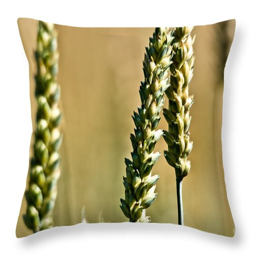 Wheat Throw Pillow featuring the photograph Wheat Stalks by Cheryl Baxter