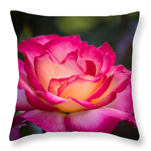 Rose Throw Pillow featuring the photograph When It's Love by Patricia Babbitt