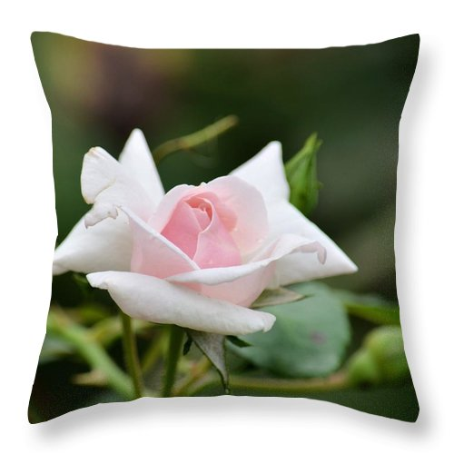 When You Were Young Throw Pillow featuring the photograph When You Were Young by Maria Urso