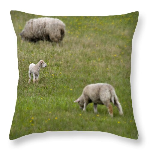 Baby Animals Throw Pillow featuring the photograph Where Is Mom by David Arment