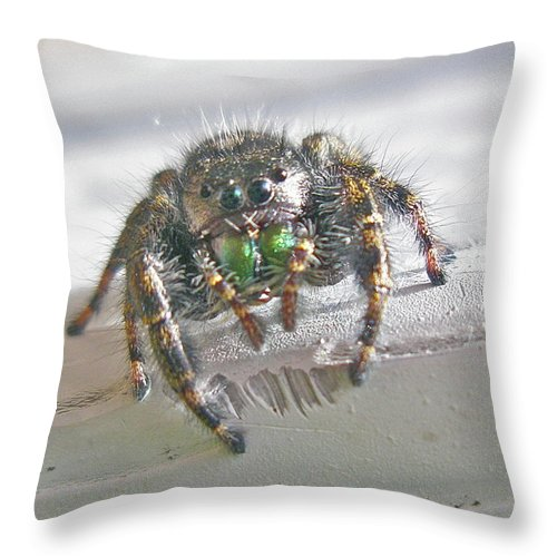 Spider Throw Pillow featuring the photograph Where'd You Get Those Eyes by Mother Nature