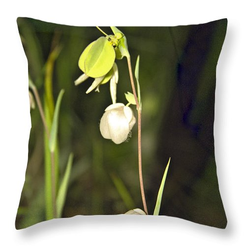 Wildflowers; Globes; Nature; Green; White Throw Pillow featuring the photograph Whispers by Kathy McClure