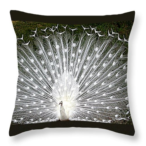 White Peacock Throw Pillow featuring the photograph Whit Peacock by Joyce Woodhouse
