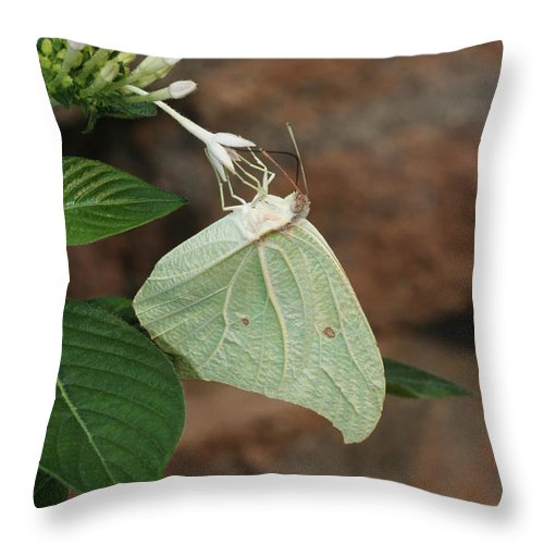 Butterfly Throw Pillow featuring the photograph White Angled Sulphur #2 by Judy Whitton