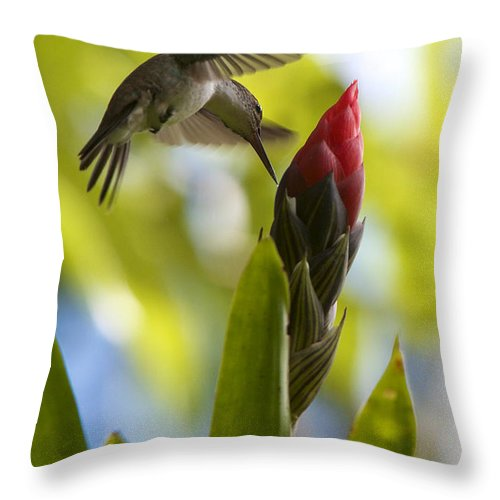 Honduras Throw Pillow featuring the photograph White-bellied Emerald by David Beebe
