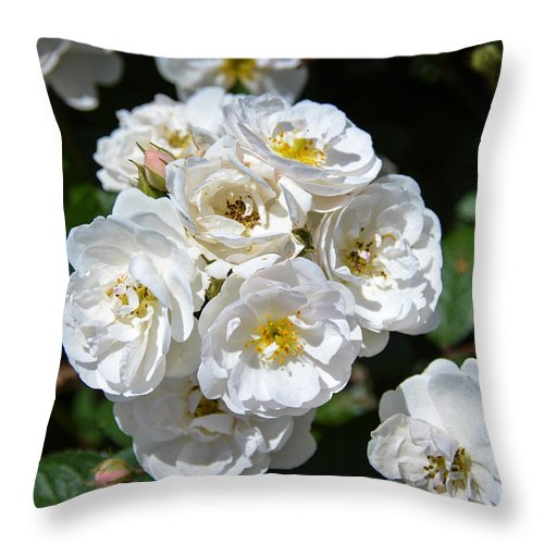 Flowers Throw Pillow featuring the photograph White Bouquet by M Dale
