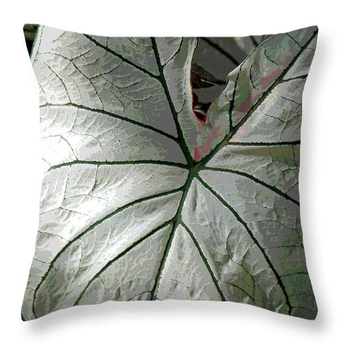 Caladium Throw Pillow featuring the photograph White Caladium by Suzanne Gaff
