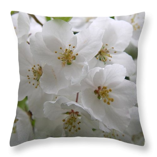 Cherry Blossom Throw Pillow featuring the photograph White Cherry Blossoms by Christiane Schulze Art And Photography