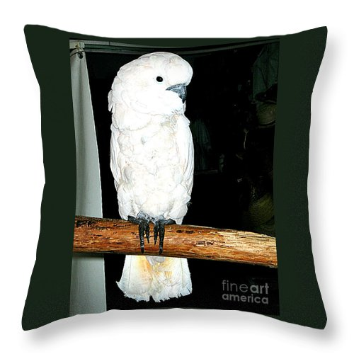 Birds Throw Pillow featuring the photograph White Cockatiel-loreto Mx. by Jay Milo