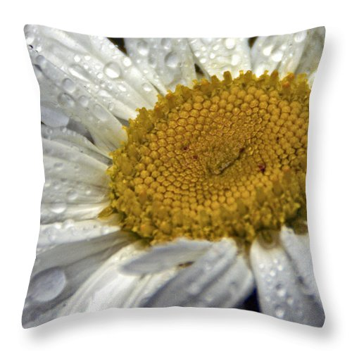 Macro Daisy Photography Throw Pillow featuring the photograph White Daisy by Catherine Melvin