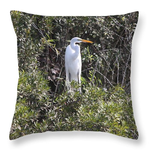Egret Throw Pillow featuring the photograph White Egret In The Swamp by Christiane Schulze Art And Photography