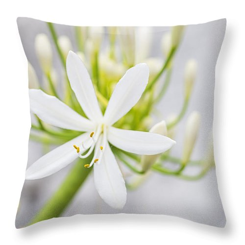 Daisy Throw Pillow featuring the photograph White Flower by Paulo Goncalves