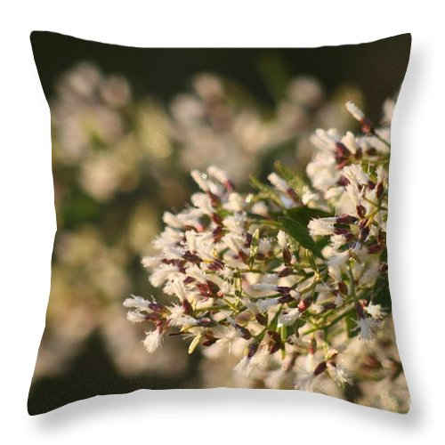 White Throw Pillow featuring the photograph White Flowers by Nadine Rippelmeyer