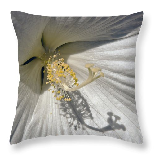 Hybiscus Throw Pillow featuring the photograph White Hybiscus Close Up by Dennis Coates
