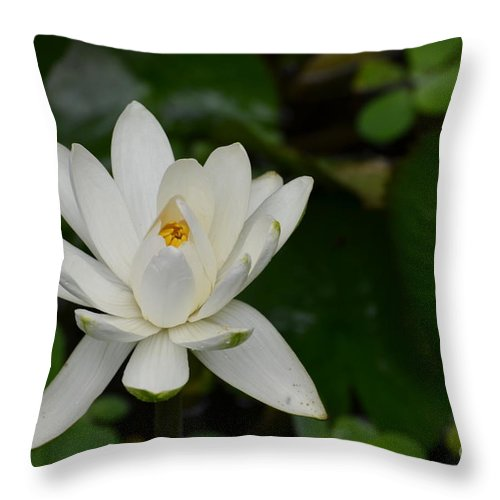 Lotus Throw Pillow featuring the photograph White Lotus by DejaVu Designs
