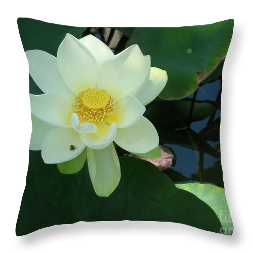 White Lotus Throw Pillow featuring the photograph White Lotus I by Christiane Schulze Art And Photography