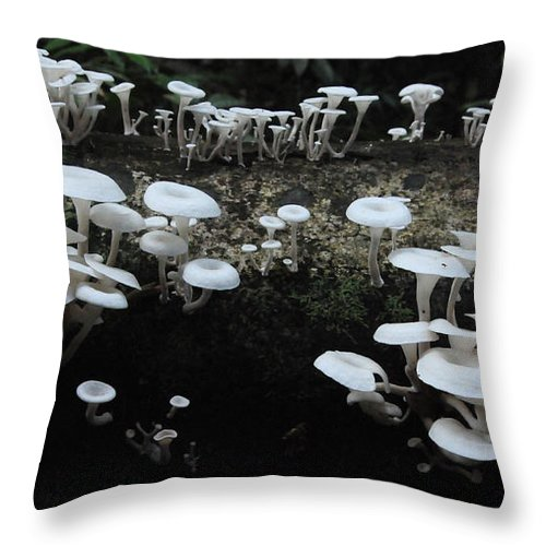 Mushrooms Throw Pillow featuring the photograph White Mushrooms Amazon Jungle Brazil 1 by Bob Christopher