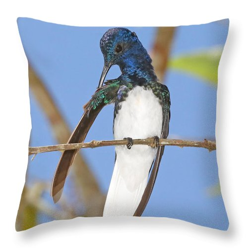 Nature Throw Pillow featuring the photograph White-necked Jacobin by Mike Dickie