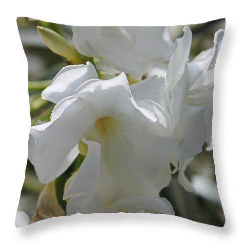 Augusta Stylianou Throw Pillow featuring the photograph White Oleander by Augusta Stylianou