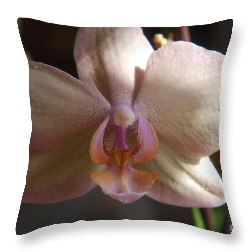 Beautiful Throw Pillow featuring the photograph White Orchid by Mark McReynolds
