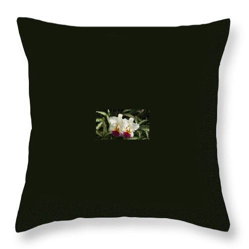 Orchids Throw Pillow featuring the photograph White Orchids by Donna Walsh