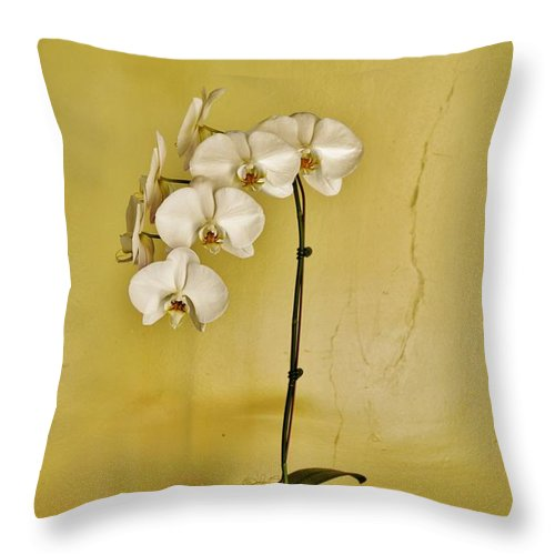 White Orchids Throw Pillow featuring the photograph White Orchids by Jean Goodwin Brooks