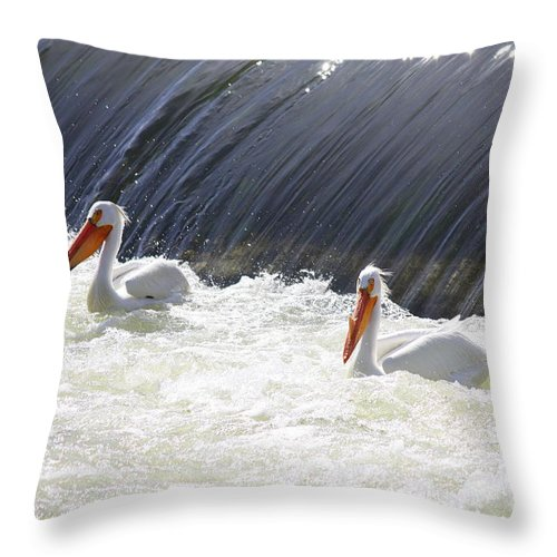 American White Pelicans Throw Pillow featuring the photograph White Pelicans by Carol Groenen