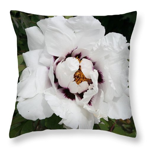 Flowers Throw Pillow featuring the photograph White Peony by Christiane Schulze Art And Photography