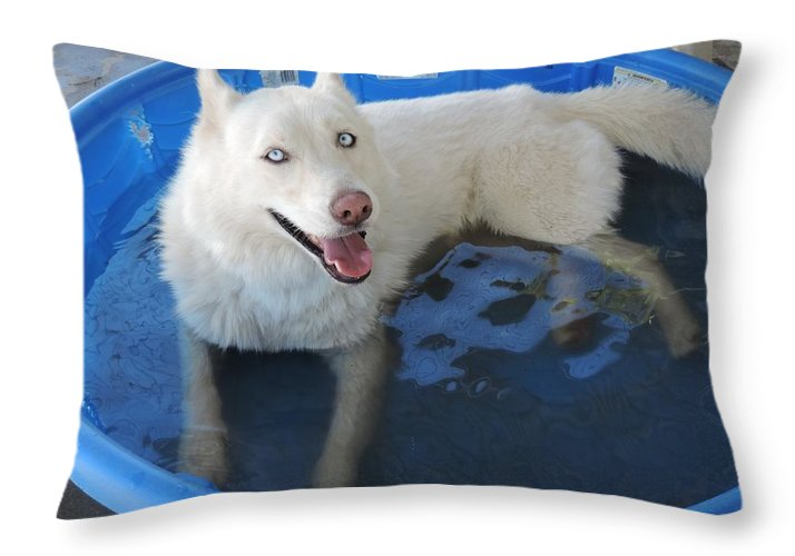 Dog Throw Pillow featuring the photograph White Siberian Husky In Pool by Enaid Silverwolf