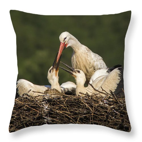 White Throw Pillow featuring the photograph White Stork by Mircea Costina Photography