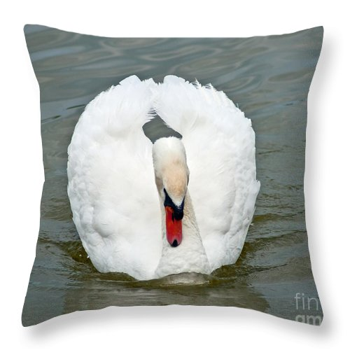 White Throw Pillow featuring the photograph White Swan Swimming by Stephen Whalen