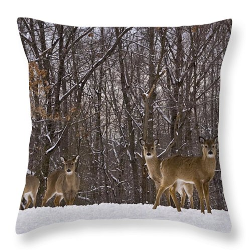 Deer Throw Pillow featuring the photograph White Tailed Deer by Anthony Sacco