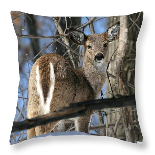 Doe Throw Pillow featuring the photograph White-tailed Deer by Ken Keener