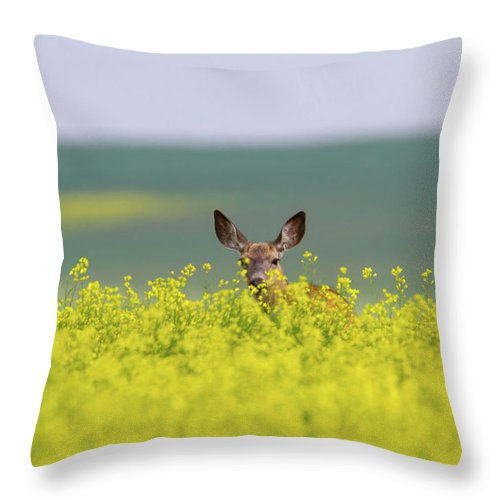 Alertness Throw Pillow featuring the photograph White-tailed Doe by Ed Matuod