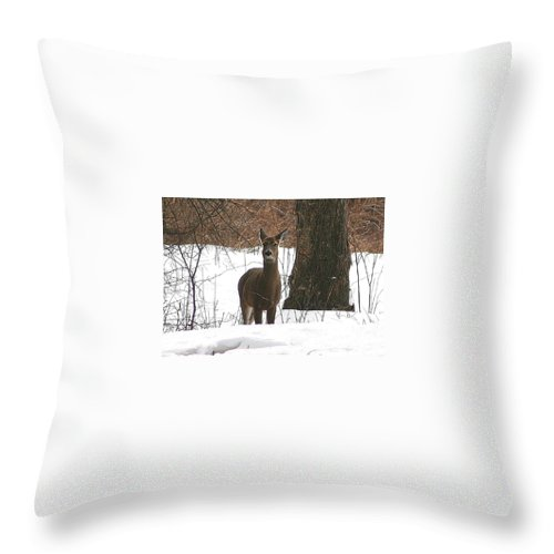 Deer Throw Pillow featuring the photograph White-tailed Winter Stand by Neal Eslinger