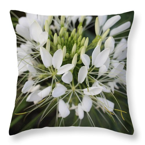 Flower Throw Pillow featuring the photograph White Tenderness by Christiane Schulze Art And Photography