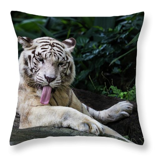 White Tiger Throw Pillow featuring the photograph White Tiger by Manoj Shah
