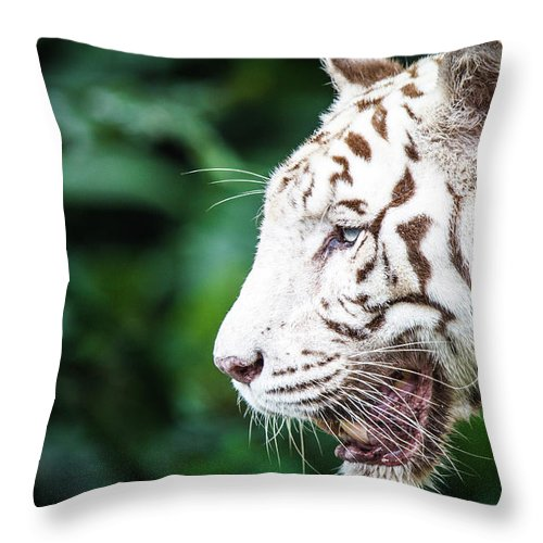 Snarling Throw Pillow featuring the photograph White Tiger by Tony Kh Lim