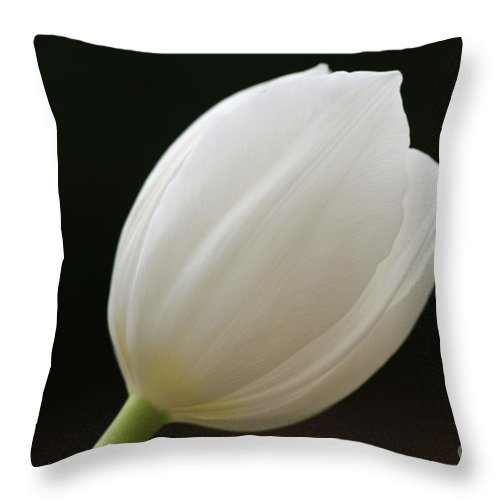 White Throw Pillow featuring the photograph White Tulip 1 by Carol Lynch