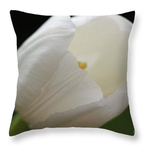 White Throw Pillow featuring the photograph White Tulip 2 by Carol Lynch