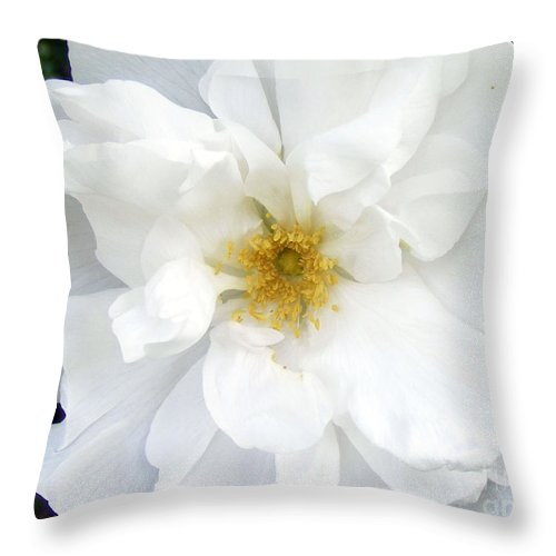 White Rose Throw Pillow featuring the photograph White Wild Rose by Barbara Griffin