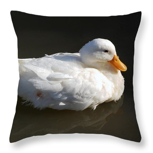 Duck Throw Pillow featuring the photograph White Wings by Leticia Latocki