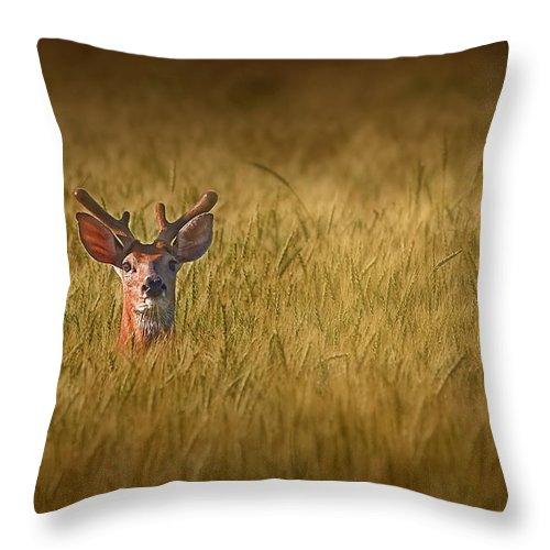 Deer Throw Pillow featuring the photograph Whitetail Deer In Wheat Field by Tom Mc Nemar