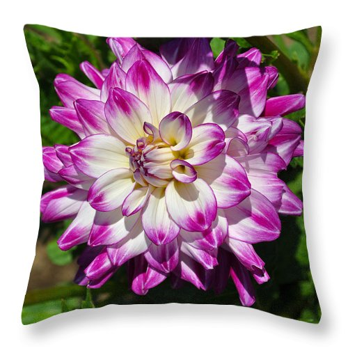 Who Dun It Dahlia Throw Pillow featuring the photograph Who Dun It Dahlia by Thomas J Rhodes