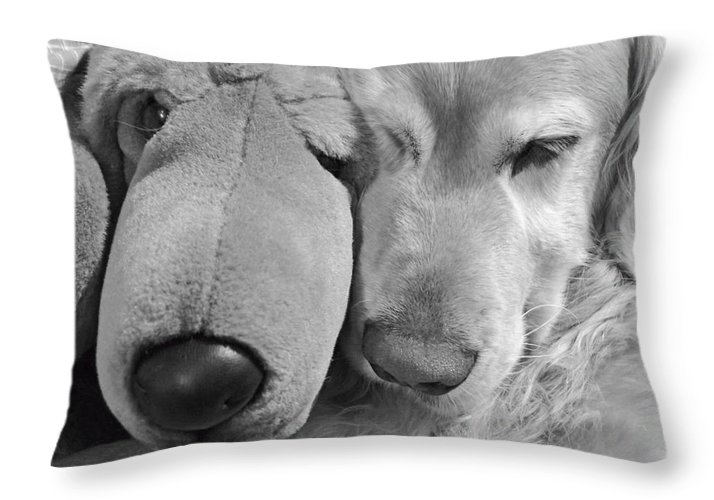 Golden Retriever Throw Pillow featuring the photograph Who Has The Biggest Nose Golden Retriever Dog by Jennie Marie Schell